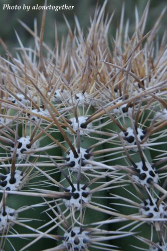 Desert Botanical Garden - Phoenix, AZ.