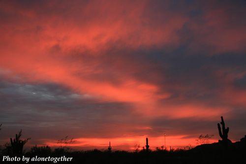 Sunset -- Desert Botanical Garden (Phoenix, AZ)